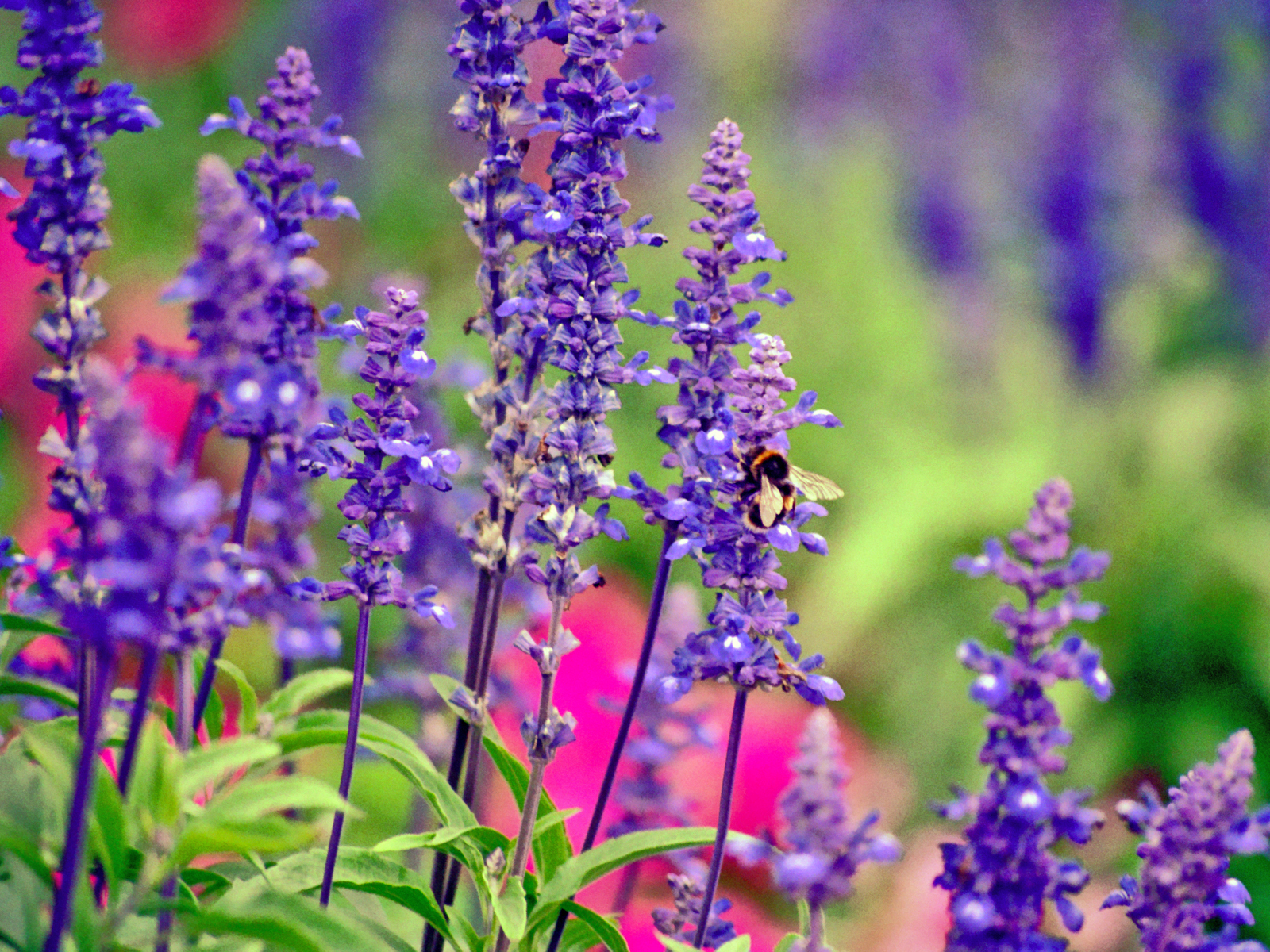 Flowers For Bees Marie Iannotti