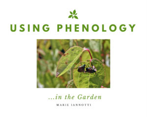 Phenoogy Cover
