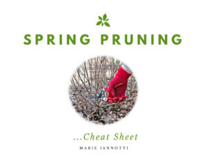 Spring Pruning Cover